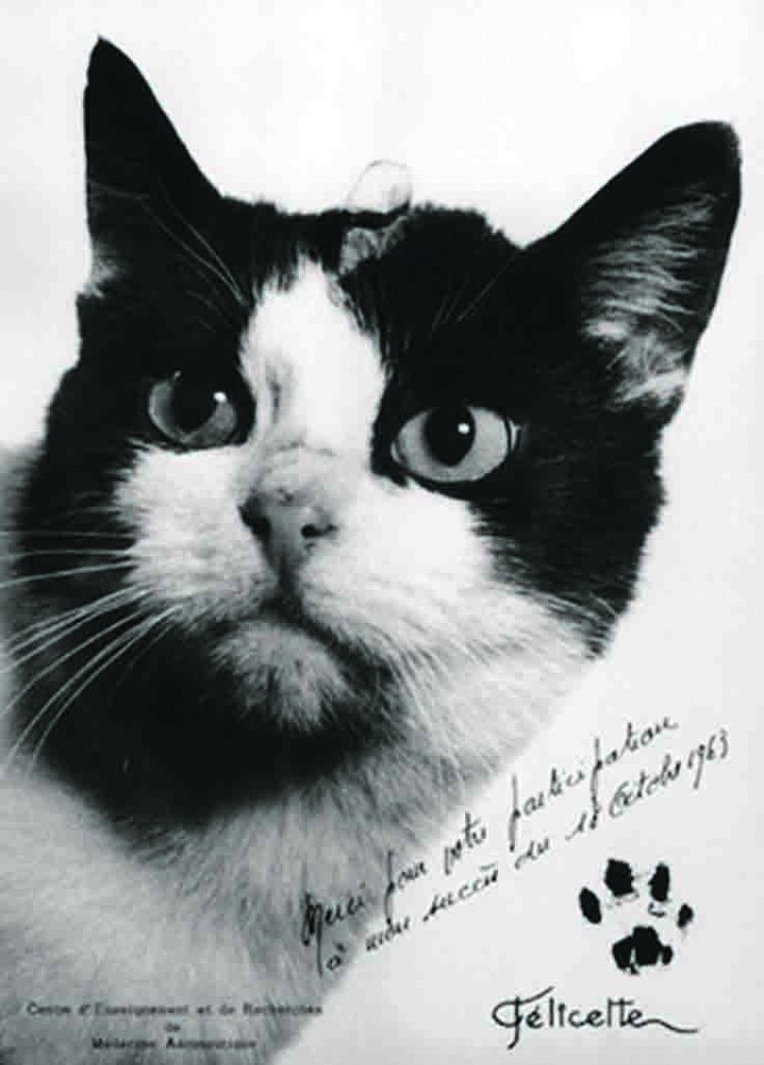 Фелисетт. Единственная кошка, побывавшая в Космосе