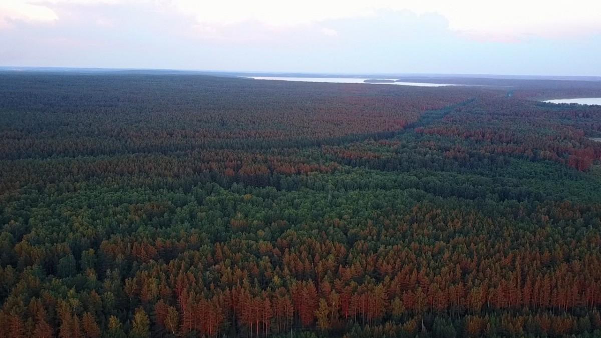 Леса Южного Урала близ озера Анбаш