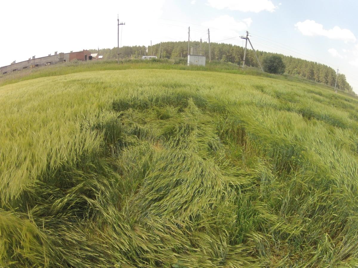 Хорошо видим прямоугольный вывал растений. Ветер такое сделать не может