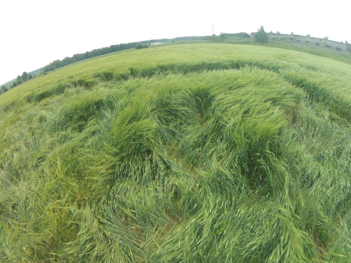 """Видна прямоугольная """"граница"""" рисунка на поле. Ветер такое не сможет..."""